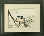 Audubon Chickadee Wildlife Bird Print 8x10 Wall Decor artwork Framed Print