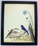 AudubonBluebird Wildlife Nature Bird Print 11 x 14 Wall Decor-Black Wood Frame