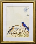 Audubon Bluebird Bird Nature Print Matted 11x14 Wall Decor Wildlife- Gold Frame