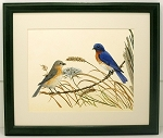 Audubon Bluebird Bird Print 10 X 12 Wildlife Wall Decor Framed Print