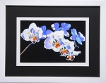 Botanical Floral White and Blue Orchid Flower Wall Decor Print 11.25x14 White Frame